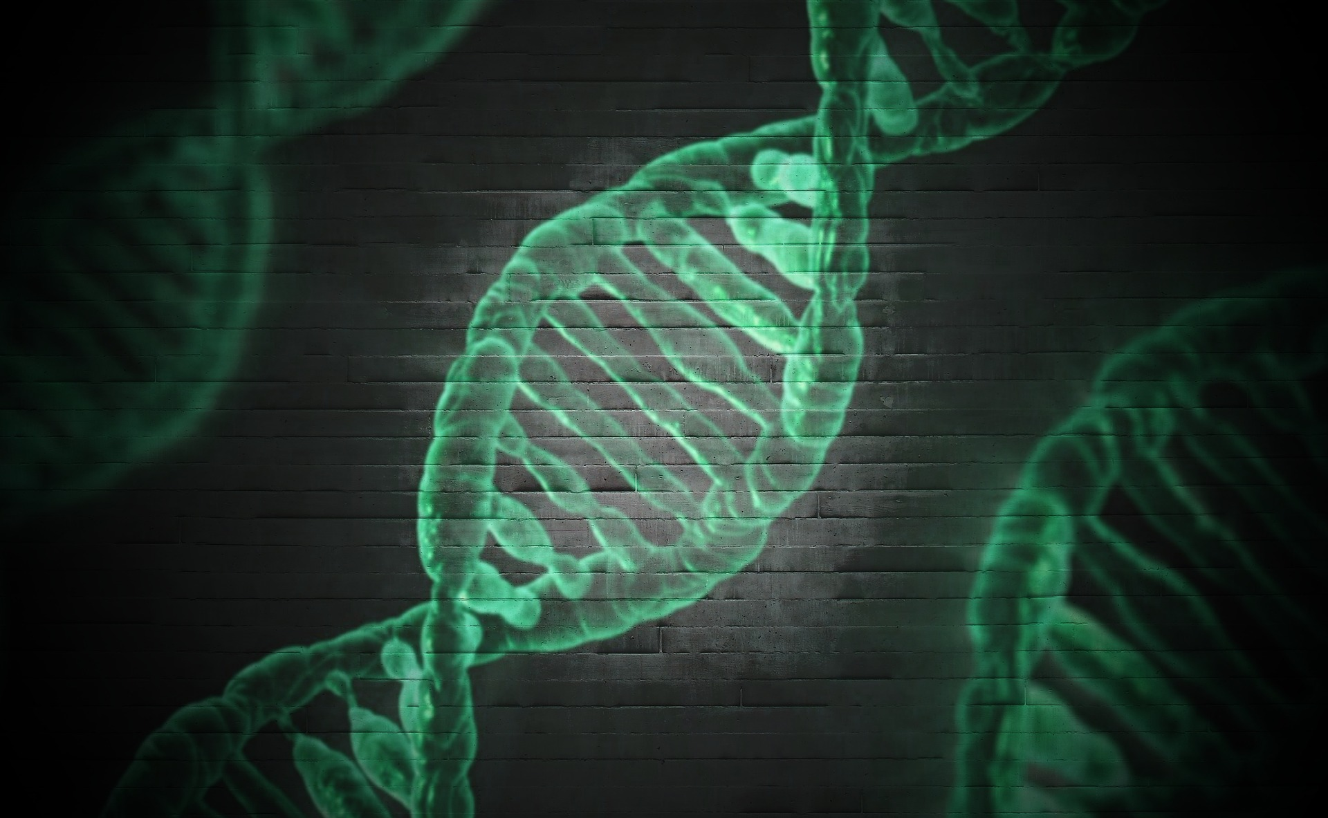 遺伝とペニスサイズ